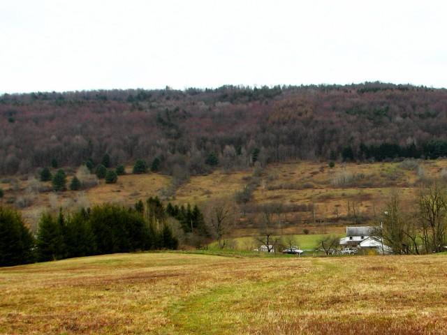 red maple hillside tinge