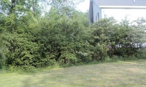 shrubby area