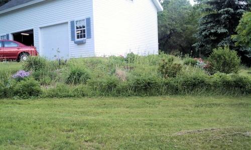 weedy ornamental garden