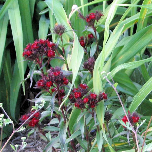 Lady Bird Johnson Centro de flores silvestres - La Universidad de Texas en Austin