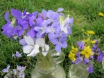 Violets in tiny vases