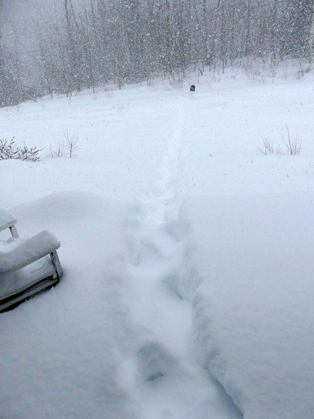 snowy walk to mailbox