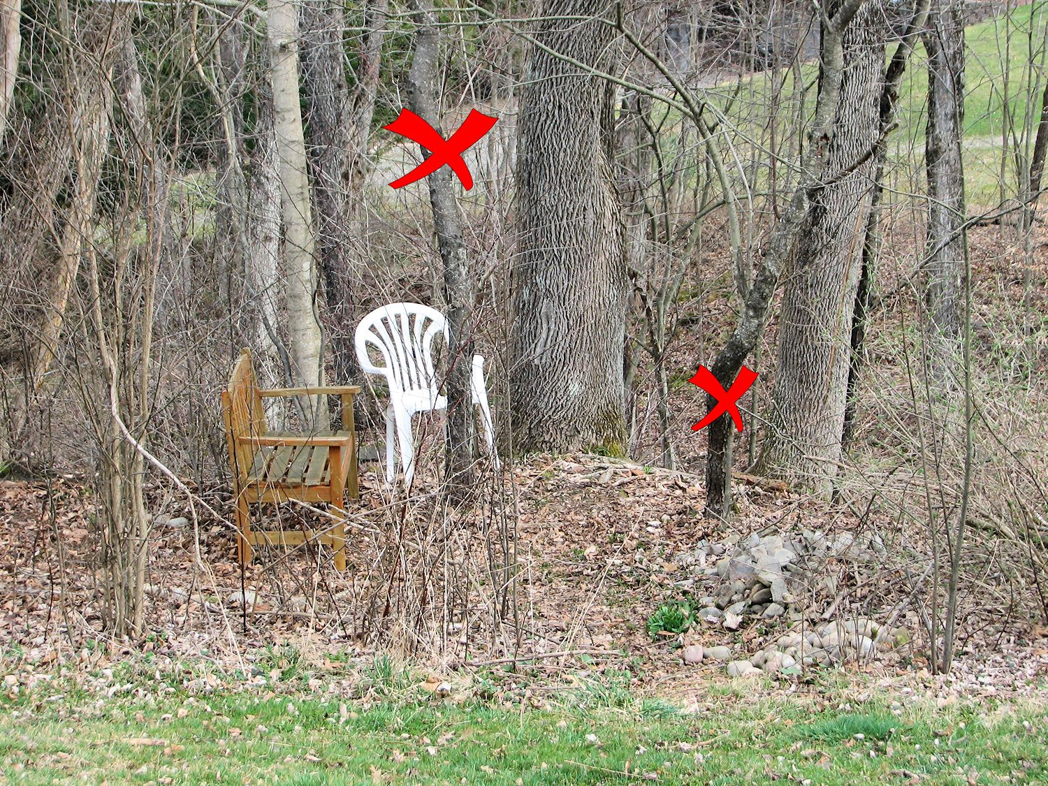 The Secret Garden Tree Diagram Woodsy Stuff Pinterest A Bench And Chair In Woods Waterfall Viewing Area