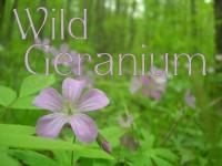 wild geranium text