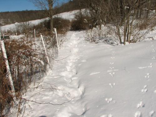 winter walk in the snow