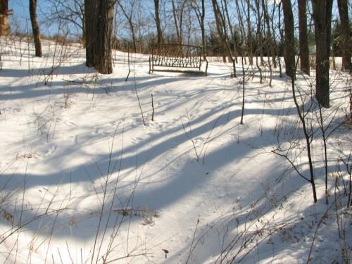 winter walk branches bench