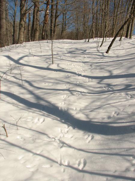 Winter Walk up the hill