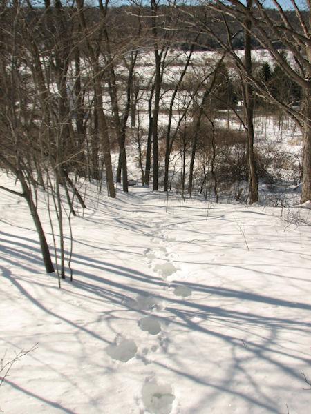 Winter walk footsteps
