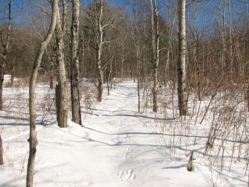 winter walk level part