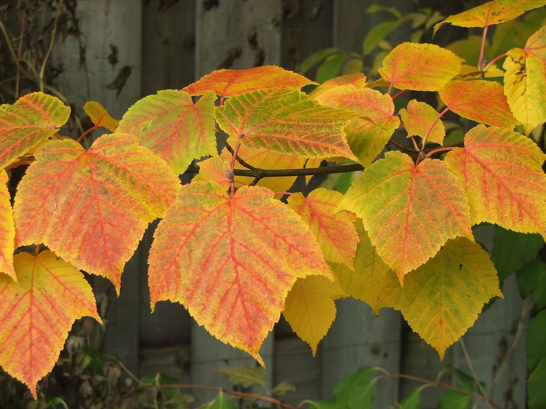 autumn magic  lilactree farm garden notes  postscript  2014